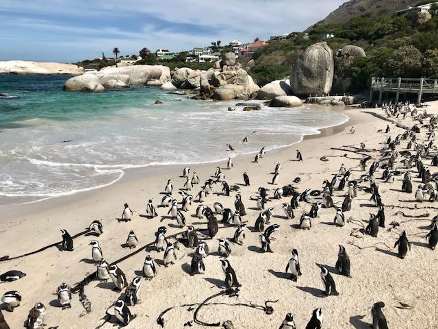 pingviiniranta